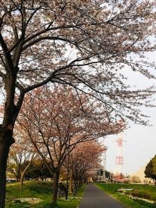 IMG_6890 - コピー (2)